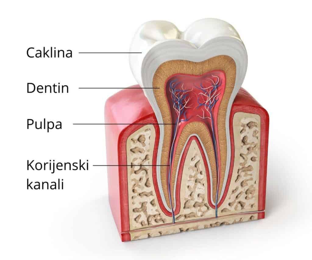 Anatomija zuba